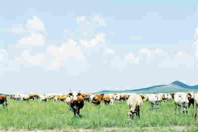 扎鲁特旗大力发展生态效益型畜牧业